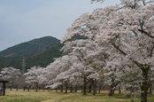 「小百川さくら公園」:4/17