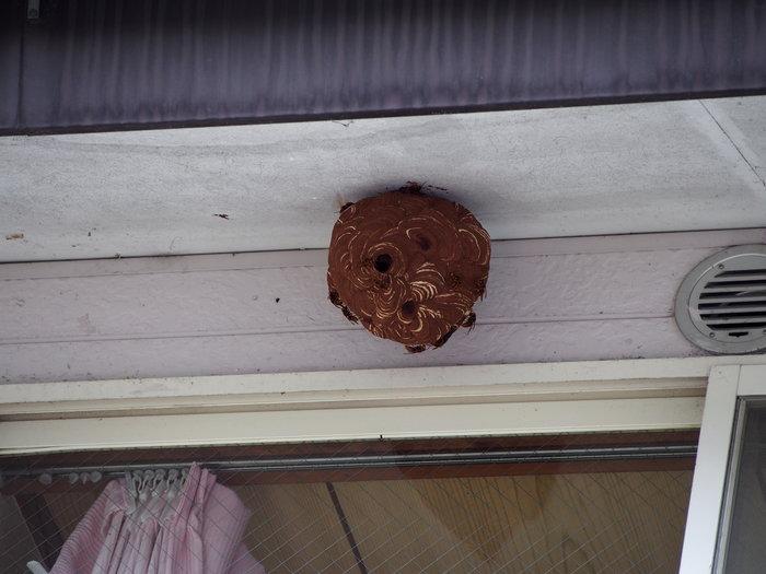 「蜂の巣」退治