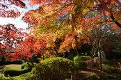 日本庭園の紅葉(12/1)2