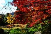 日本庭園の紅葉(12/1)3