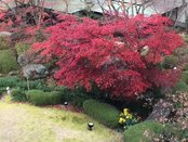 庭園風景 20